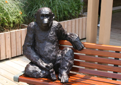 ベンチに腰掛けるチンパンジー