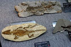 爬虫類の化石