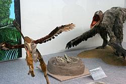 鳥になりたかった恐竜たち